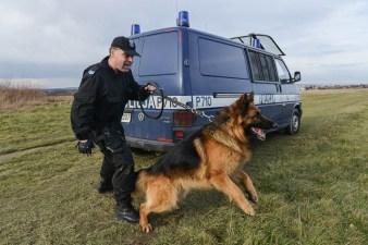 Przewodnik psa policyjnego