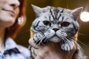 Fotografia zwierząt: wystawa kotów