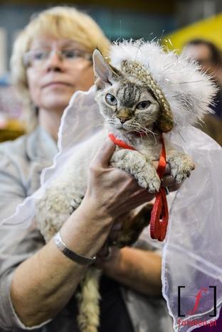 Cat's fashion show