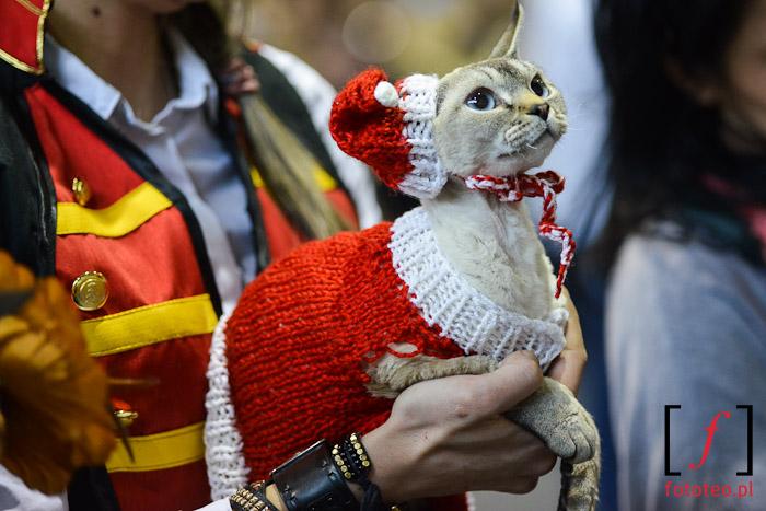 Cats fashion show