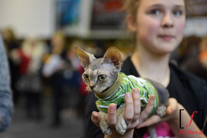 Mały kotek na wystawie