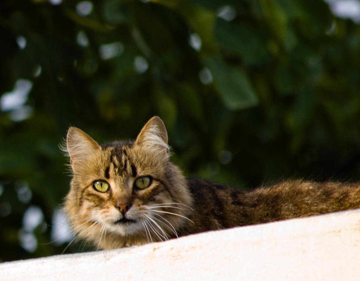 Gato de medianera