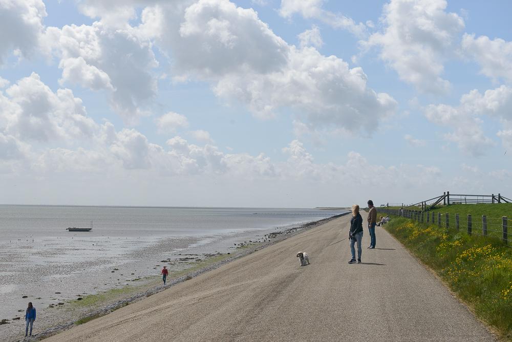 Texel bij Dijkmanshuizen