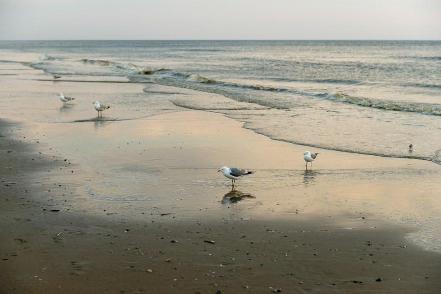 Meeuwen op strand Texel