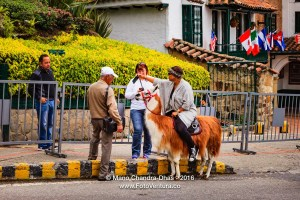 Bogota, Colombia - Tourist on Llama shoots Selfie on cellphone