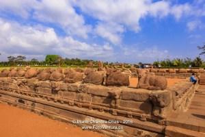 Mahabalipuram, India: Sculpted Stone Cattle and Tourists near Sh
