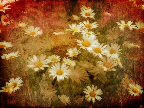 daisy flower on canvas