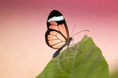 butterfly acrylic wall art