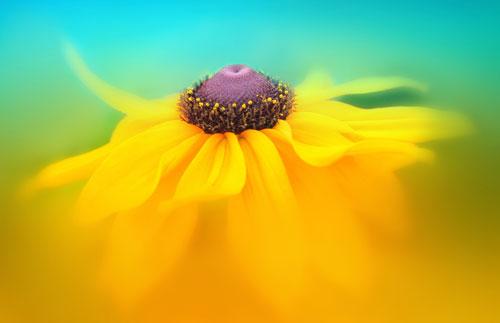 stunning flower picture