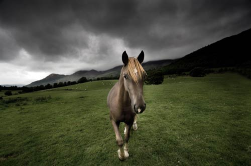 horse picture on canvas