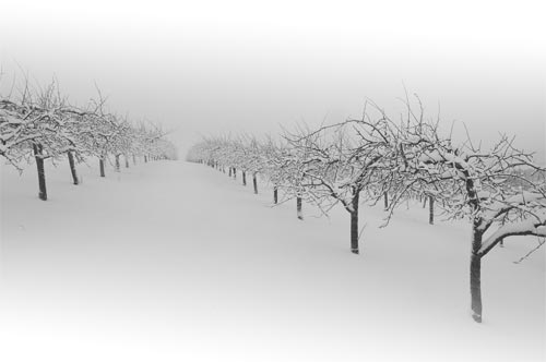 winter orchard snow print floating acrylic