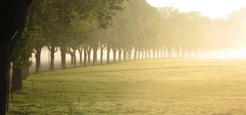 Misty Trees panoramic canvas poster print