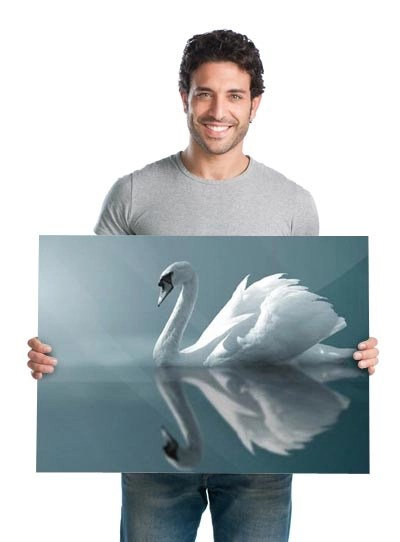 man holding acrylic photo wall print of swan