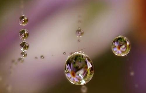 Cobweb Tears