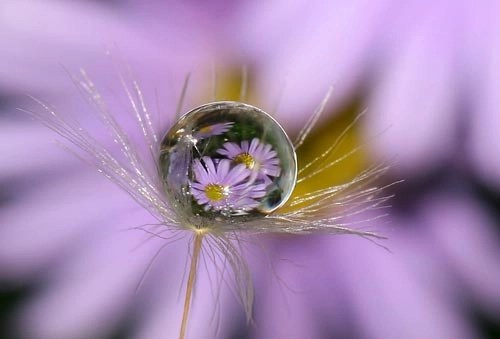 Daisy Reflections
