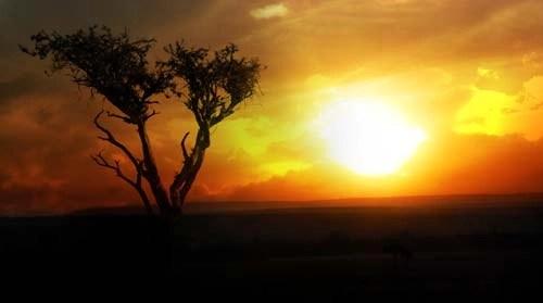 Masai Mara Tree Sunrise