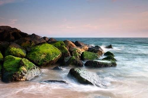 Moss on the Rocks