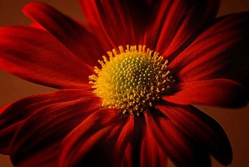 Red Petals