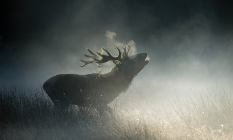 Big old stag silhouetted in the misty morning light at Richmond park. © Andrew Marshall
