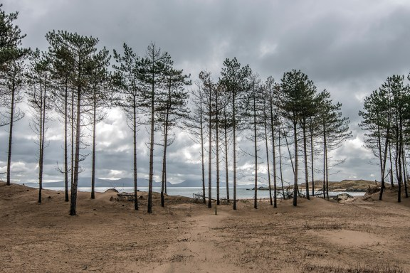 Pines of Newborough Forest tower above the sandy beach. Nikon D800, 24-120 at 28mm, 1/180 sec @ F/11, ISO 100. © Simon Kitchin