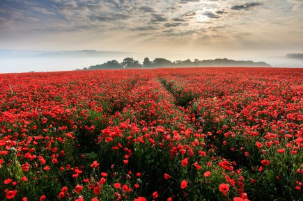 Large poppy field above Durweston. Canon 5D mark II, Zeiss 18mm, ISO 100, 1/20th second at f/6, LEE 0.9 hard grad. © Mark Bauer