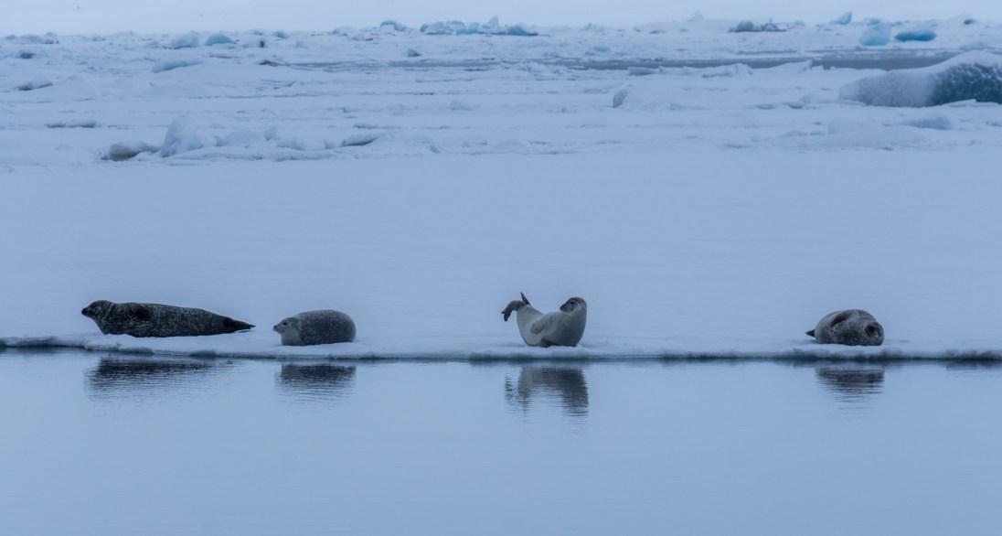 iceland22-1