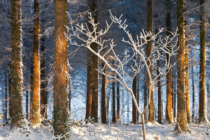 Snowy Woodland, Morchard Bishop, Devon. Canon 1Ds Mk III, Canon 24-70 at 64mm, ISO 100, 1.6s at f/22, December. Tripod. ©Adam Burton