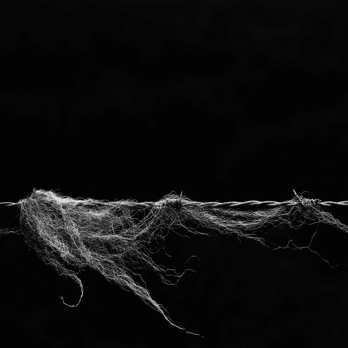Wool on wire, Devil's Dyke. Canon 6D, Canon EF 24-105mm f/4 at 88mm, ISO 400, 1/640s at f/6.3. July. © Beata Moore