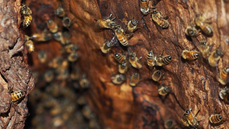 Photograph of Wild Bees by Terry Wheeler Photography