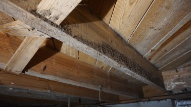 Mold on crawl space on wooden beams