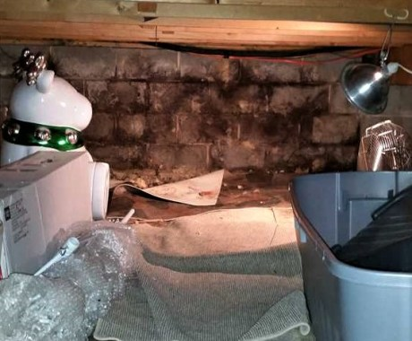 Crawl Space Moisture 101 – Causes, Problems, and Fixes