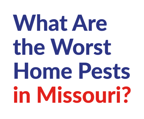 What Are the Worst Home Pests in Missouri?