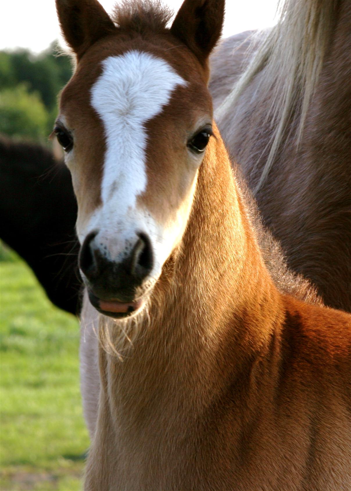 Hackney Pony Foal Jane S Foundmyself