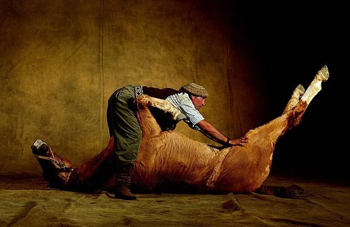 Found Shit Horse Funny Bizarre Amazing Pictures