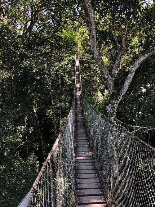 travel to Peru Puerto Maldonado foot bridge