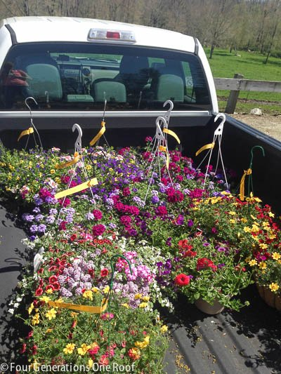 hanging spring flowering plants in back of pickup truck