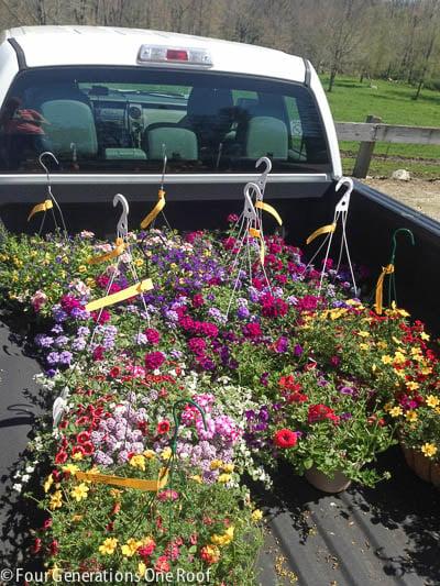 hanging spring flowering plants in back of pickup truck