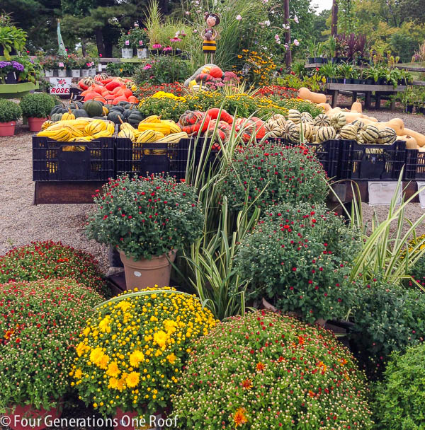 DIY watering can flower pot