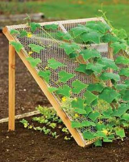 wood trellis with screen growing cucumbers