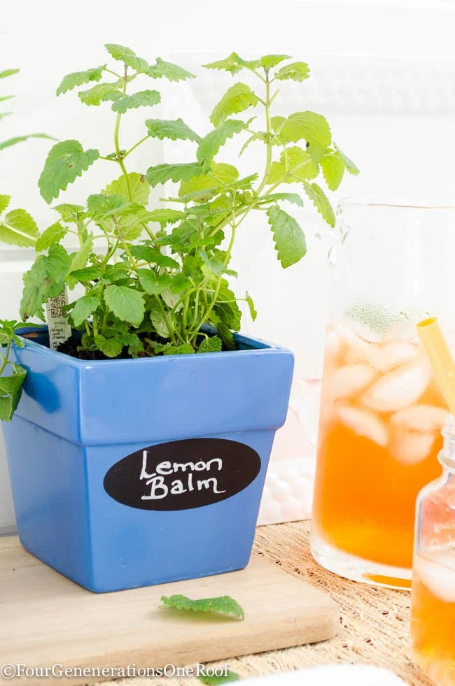 DIY Blue Herb Planter {tea herbs} How to spray paint a planter and create a fun planter full of lemon balm and Spearmint.