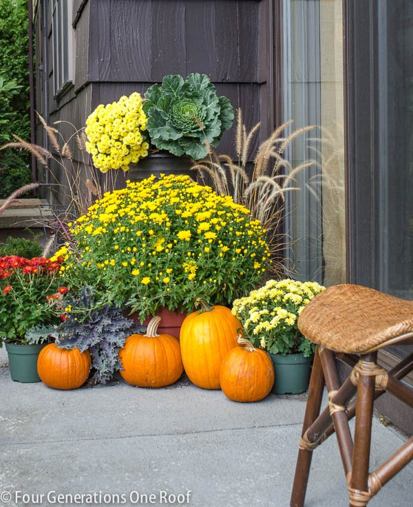 Fall Planter Ideas | Mums Pumpkins and mixed dried grasses