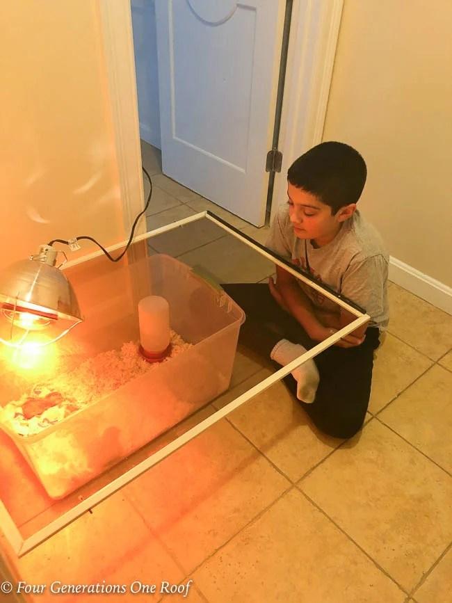 DIY chicken brooder plastic tote in bathroom floor with boy and heat lamp