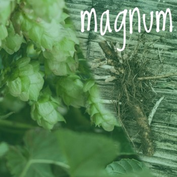 Magnum Hop 2018 Rhizome