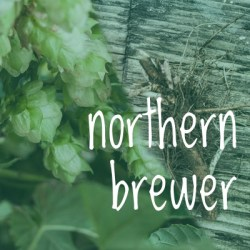 Northern Brewer Hop 2018 Rhizome