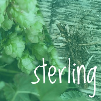 Sterling Hop 2018 Rhizome