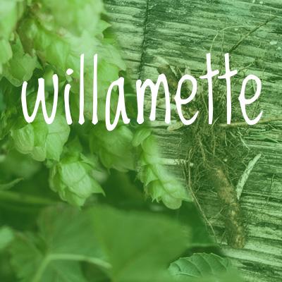 Willamette Hop 2018 Rhizome
