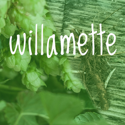 Willamette Hop 2018 Rhizome
