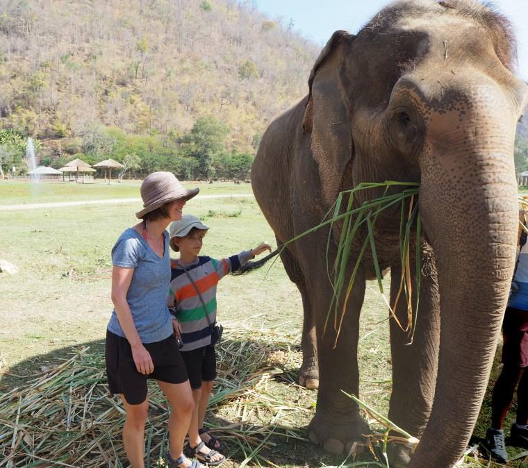 Feeding Injured Elephants in Thailand