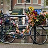 thank you for cycling, autumn 2013 – tack för att du cyklar