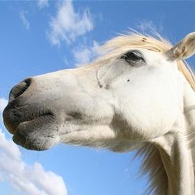 Horse_8928214006615330605